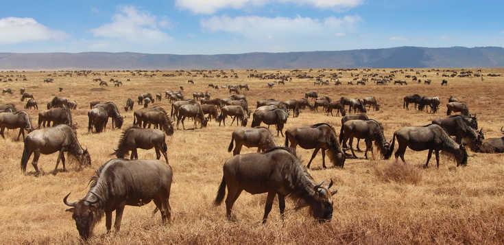 Safaris & Traumstrände zwischen Serengeti & Sansibar - Hotelvariante