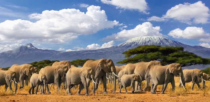 Vom Kilimanjaro zur Serengeti