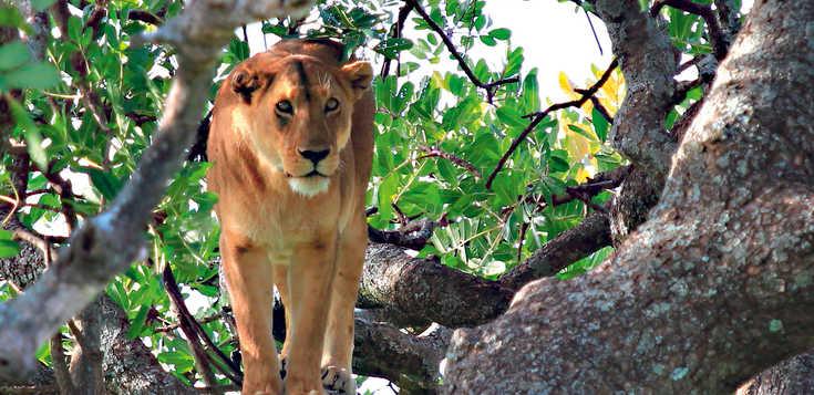 Tansania individuell: Big Five kompakt
