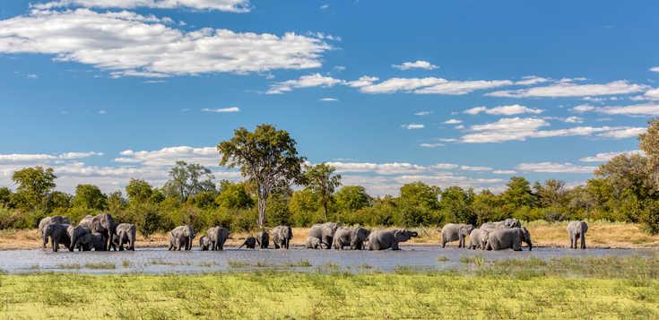 Exklusiv & Intensiv: Best of Botswana