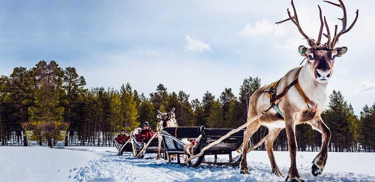 Winterliches Lappland: wild, romantisch, aktiv
