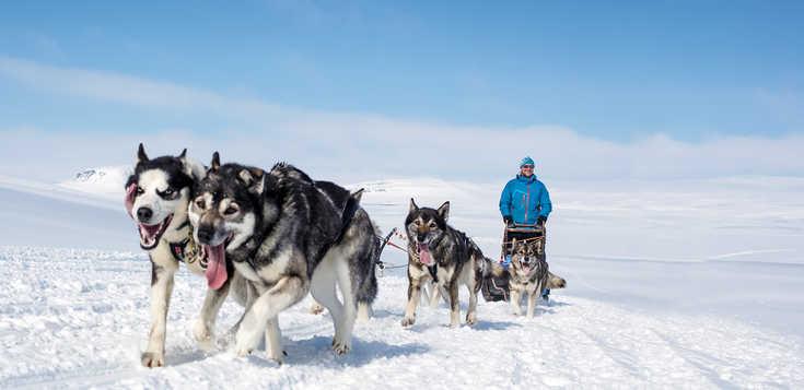 Huskyabenteuer in finnischer Wildnis