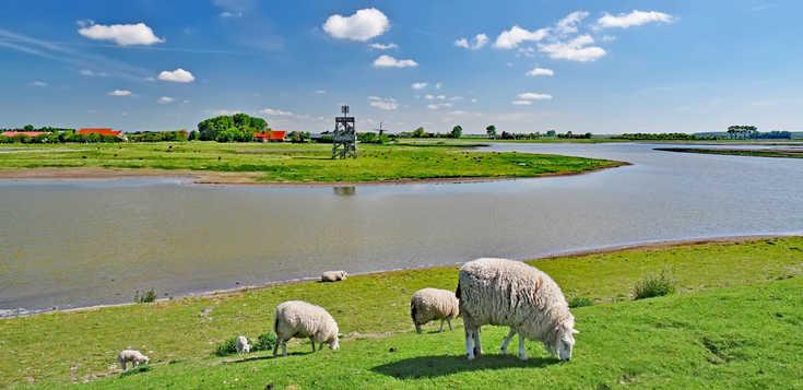 Niederlande: Zeeland mit Rad und Schiff (MS Olympia)