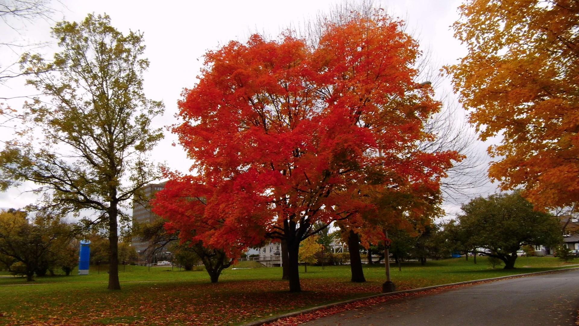 Roter Baum e