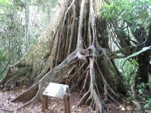 Im Khao Yai-Nationalpark