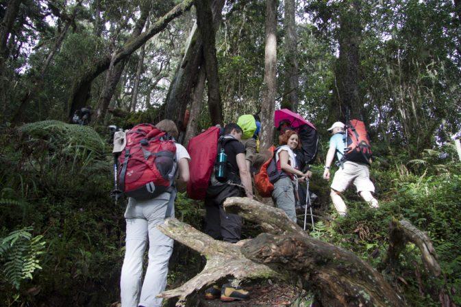"""Unterwegs im Regenwald."""""""