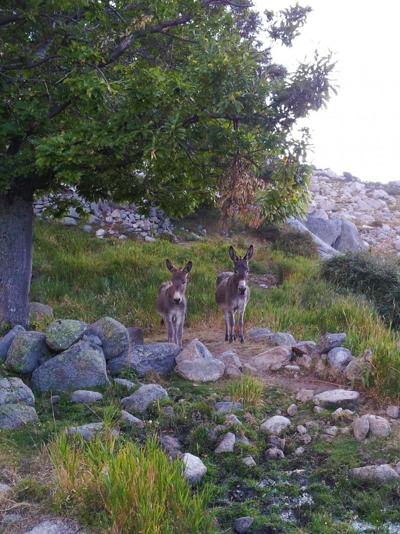 Bewohner Asinaos