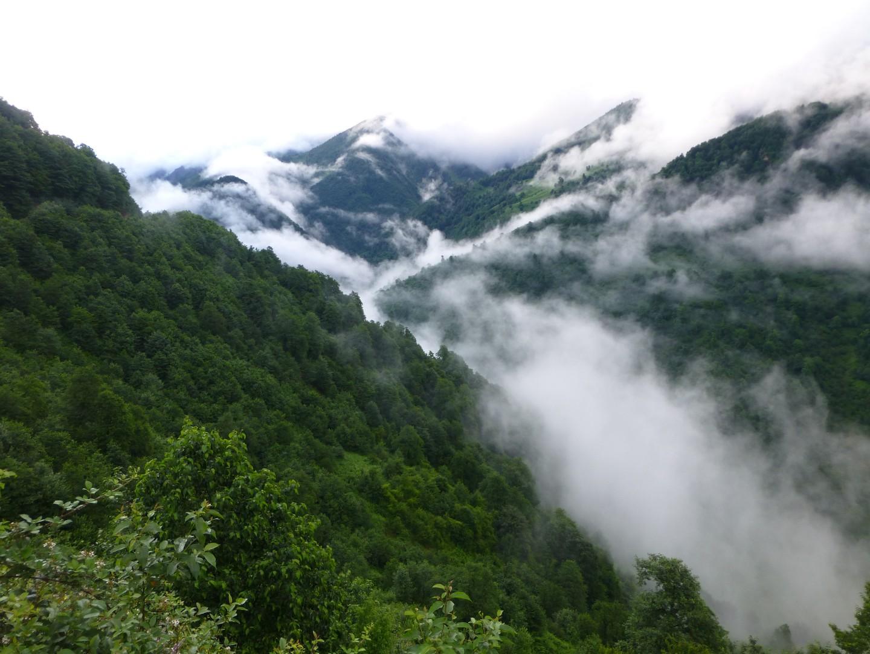 Kaspische Urwälder