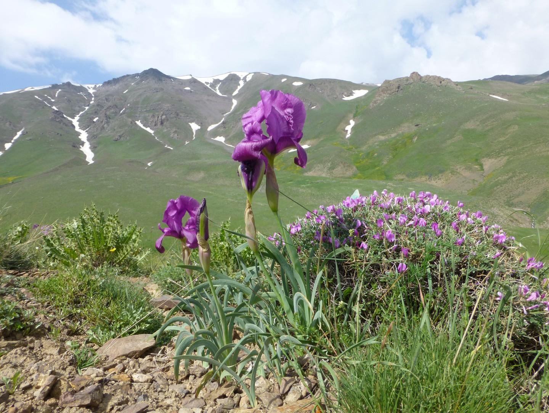 Unterwegs im Elbursgebirge