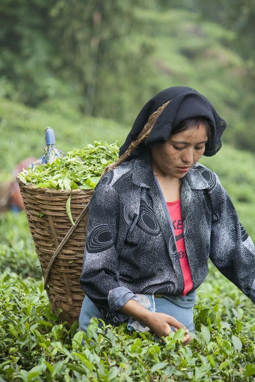 Svati ganz konzentriert bei der Arbeit. (Foto: Pallas Bhattacharya)