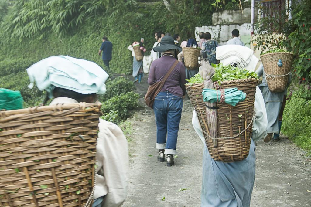 Teepflückerinnen auf dem Weg (Foto: Pallab Bhattacharya)