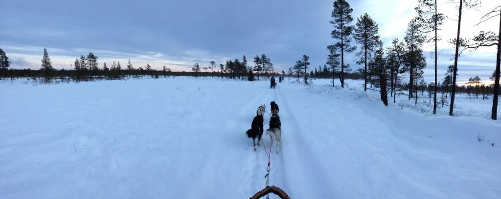 Unterwegs auf mit dem Hundeschlitten