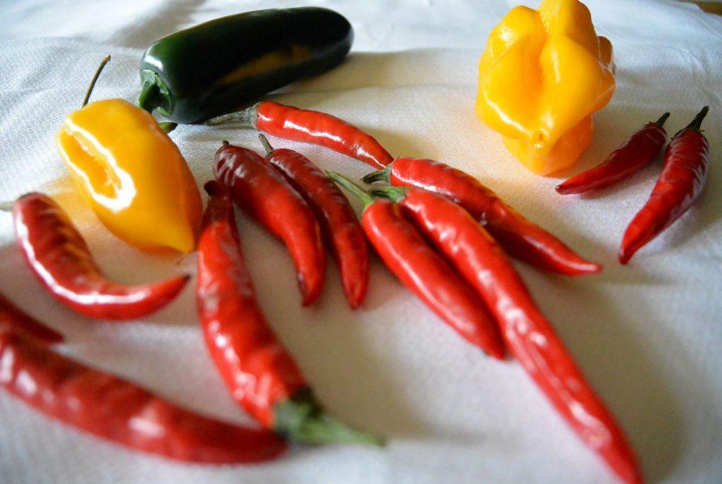 Chilisorten im Vergleich
