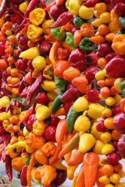 Mallorca - auf dem Markt