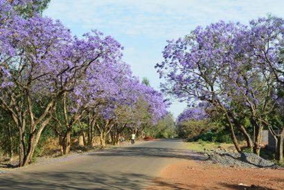 Äthiopien – Afrika pur: wild und geheimnisvoll / Teil 1