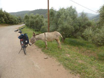 Radeln in Marokko – ein Traum aus 1001 Nacht?!