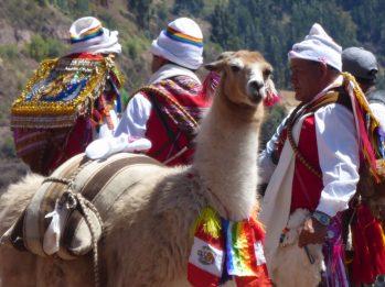Geschmücktes Lama