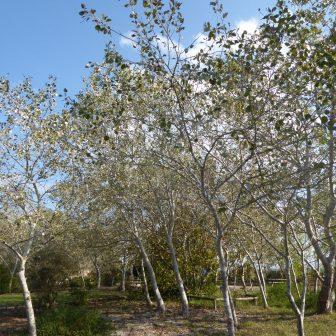 Naturpark Albufera