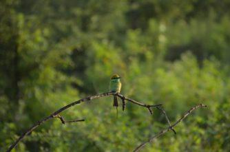 Udawalawe-Nationalpark