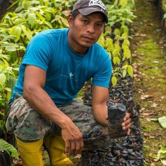 David erklärt die Kakaoanzucht