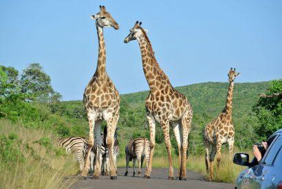Naturwunder Südafrikas