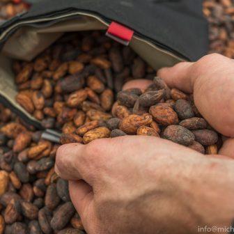 Verpacken der Kakaobohnen