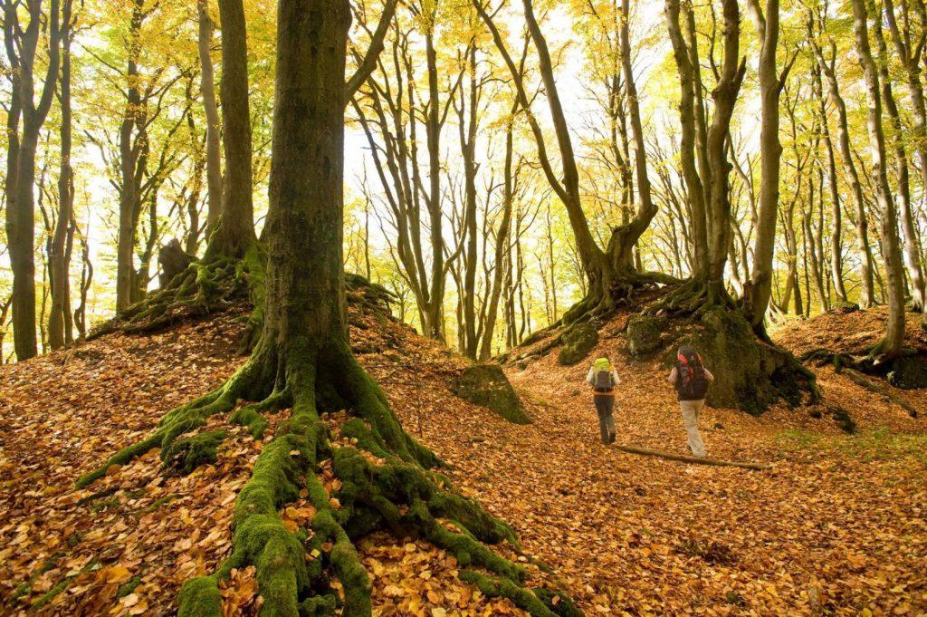 Goldener Herbst auf dem Eifelsteig