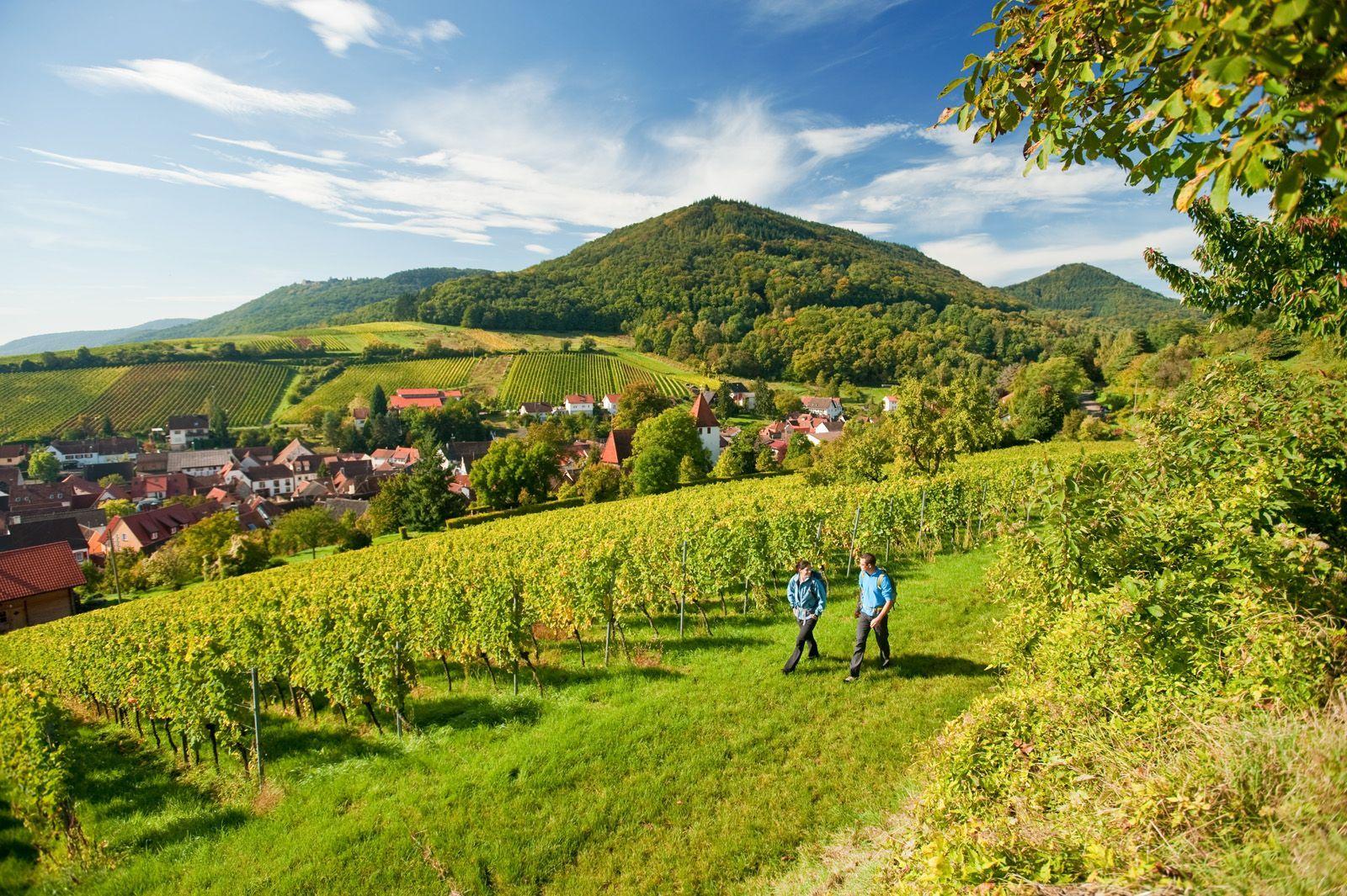 Rheinland-Pfalz – Waldmeister und Weinstar