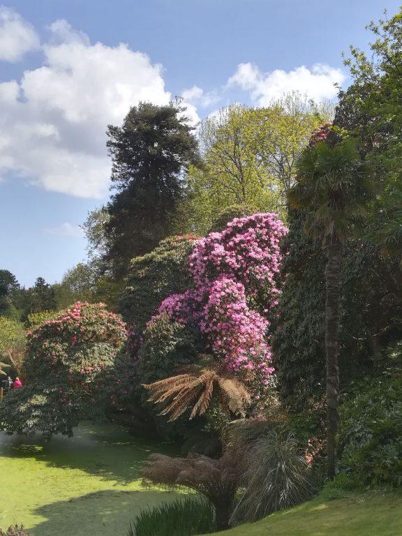 Blütenpracht in Cornwalls Lost Gardens of Heligan