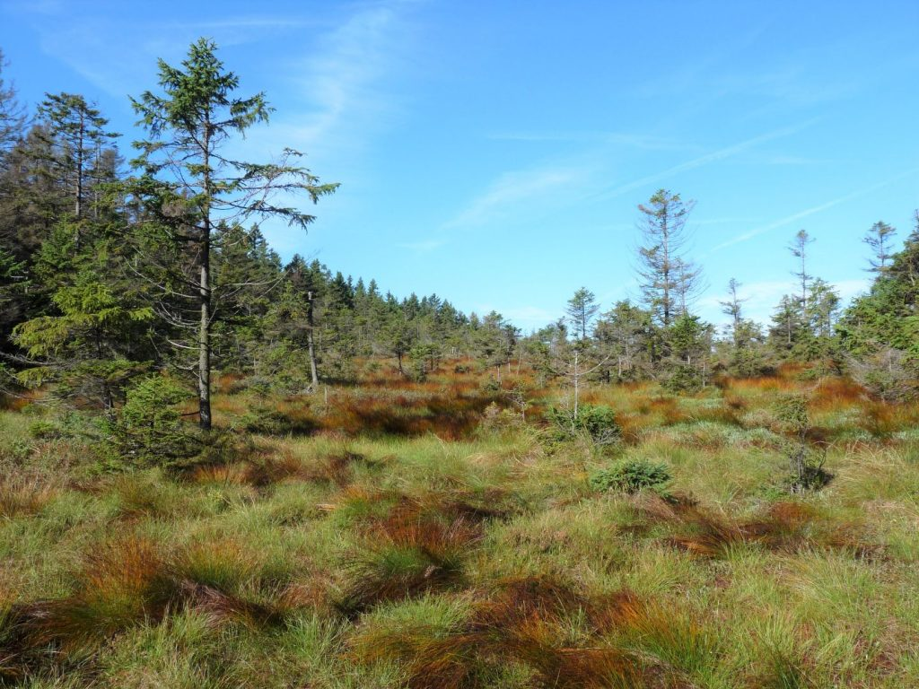 Das Brockenmoor - ein faszinierendes Biotop