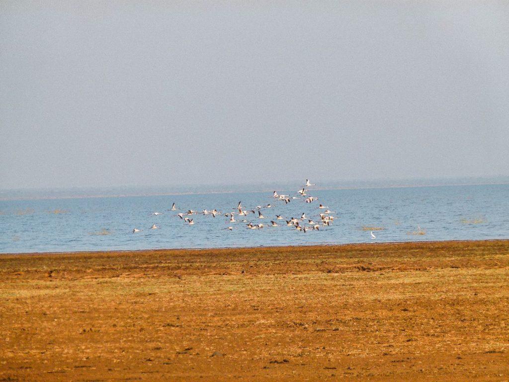 Flamingos am Lake Manjara