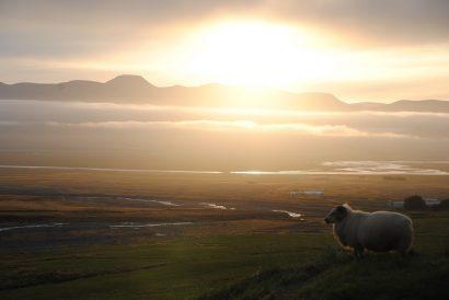 Was du in Island nicht verpassen solltest