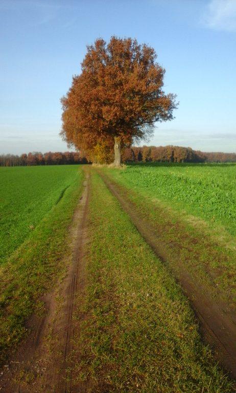 Schöne, einsame Wege gefällig? Dann nichts wie hin!