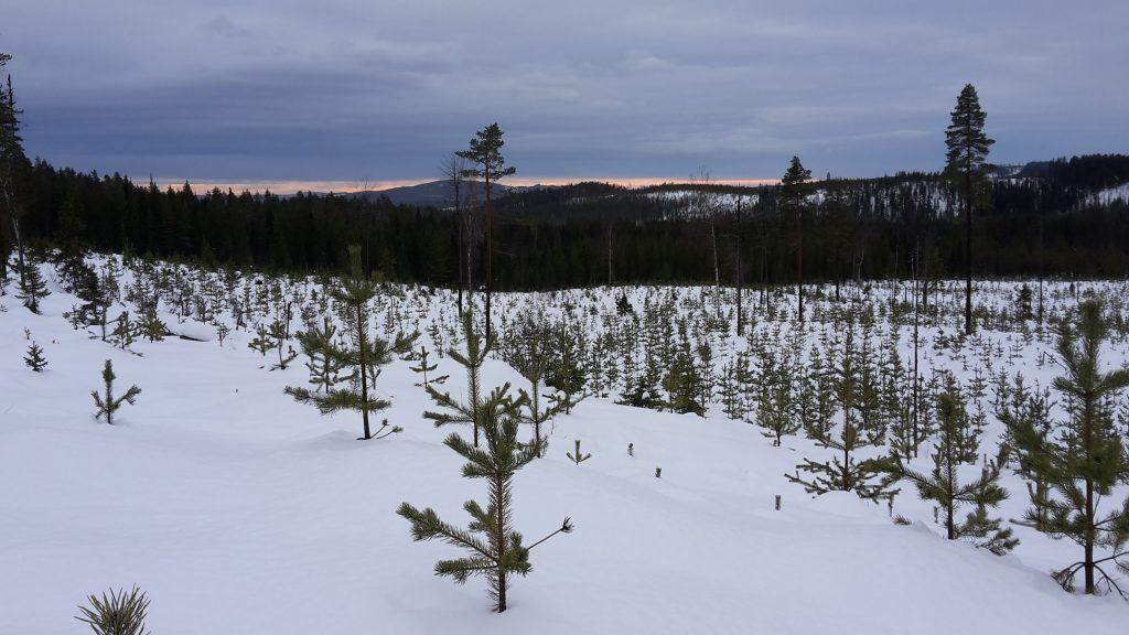 Landschaft auf der Schneeschuhwanderung