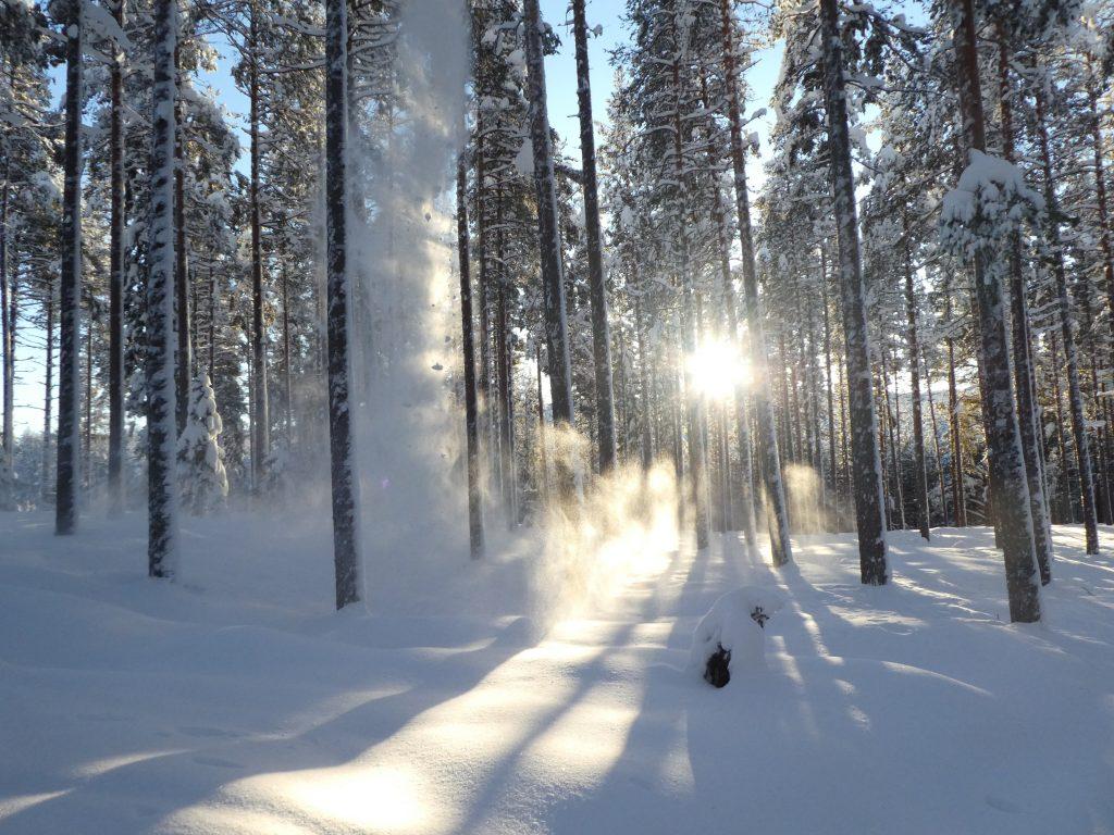 Schweden im Winter begeistert!