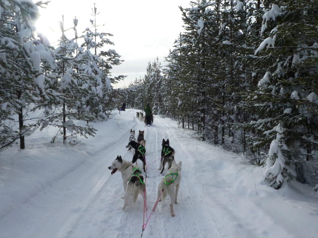 Abenteuer durch die wunderschöne Winterlandschaft.