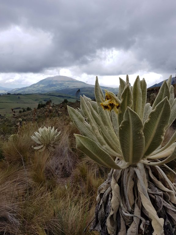 Im Schutzgebiet El Angel in Ecuador