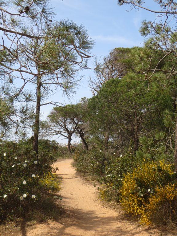 Wanderweg an der Algarve