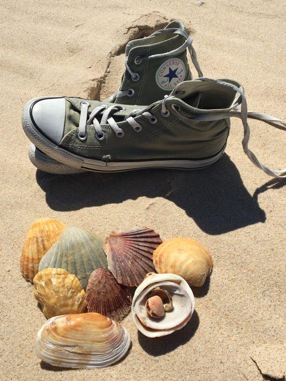 Muscheln am Strand sammeln