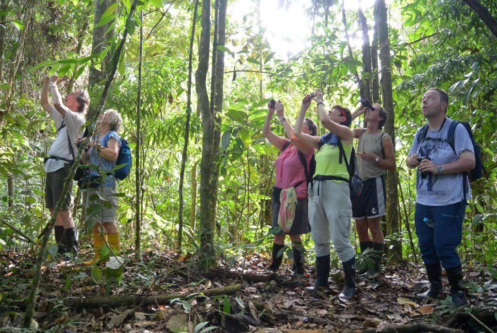 Dschungelwanderung