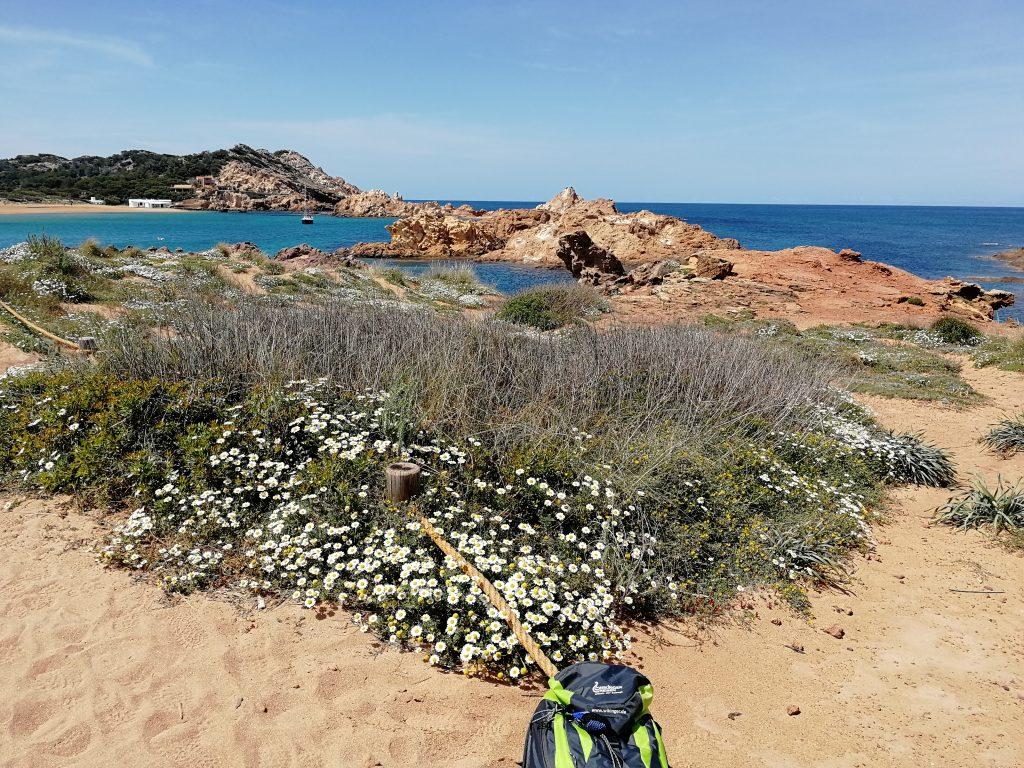 Menorca: Wilde Kamille bei Cala Pregonda