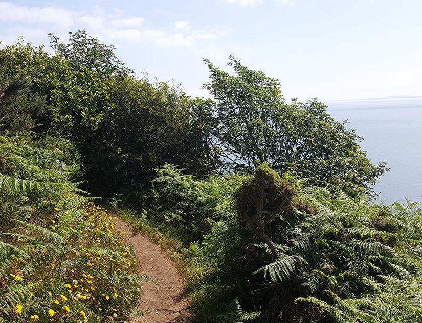 Verwilderter Pfad entlang der walisischen Küste
