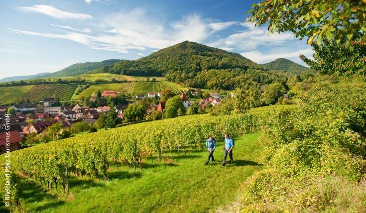 Auf dem Rotweinwanderweg in Rheinland-Pfalz